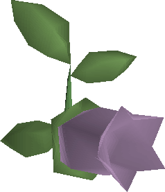 File:Cave nightshade detail.png