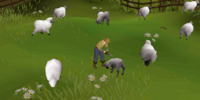 Sheep Shearer