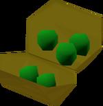 Yommi tree seeds detail
