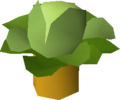 Cabbage tree.png