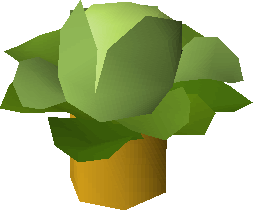 File:Cabbage tree.png