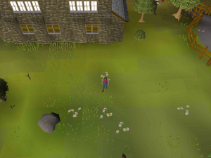 Hot cold clue - south of Draynor bank