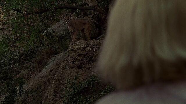 File:2x11 Kim cougar.jpg