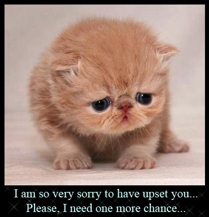 File:Cute-sad-kitten06.jpg