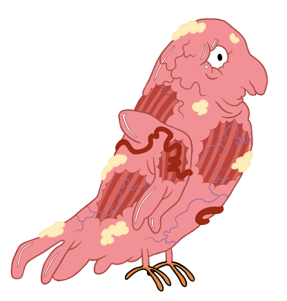File:Bird Inside Out.png