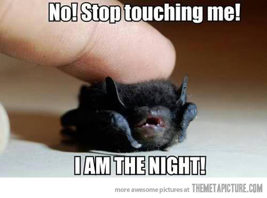 File:Funny-bat-cute-baby.jpg