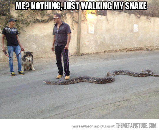 File:Funny-man-walking-snake.jpg