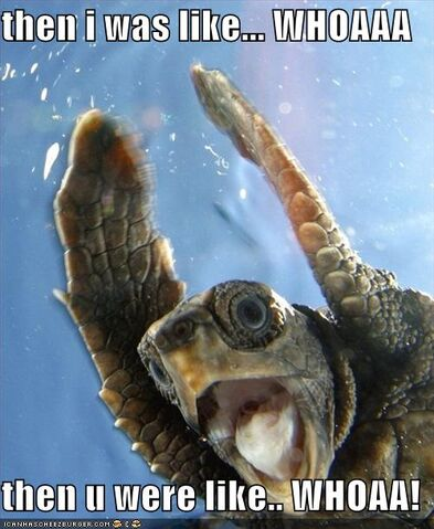 File:Funny-pictures-finding-nemo-surfer-turtle.jpg