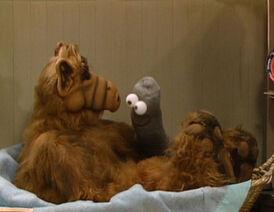 776px-Alf-Episode-005