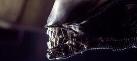 Closeup The Alien