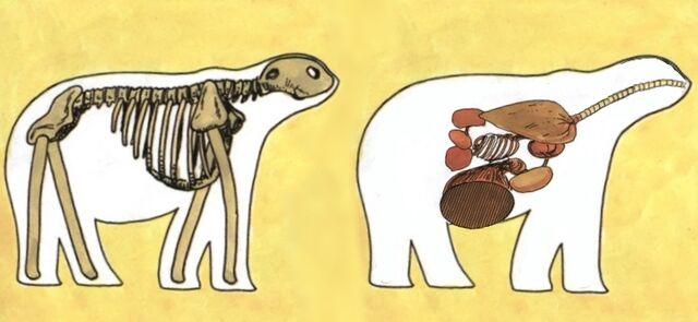 File:Ium-biology.jpg