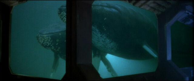 File:Humpback Whales.jpg