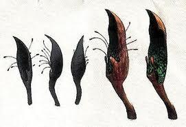 File:Zooplantae.jpeg