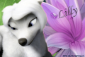Lillys-Lily-bloom-alpha-and-omega-20960692-120-81