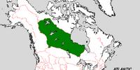 Keewatin (The Kalmar Union)