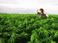 Weed Field