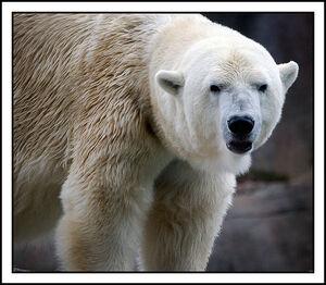 Polar Expression