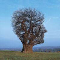 TreeOfHalfLife
