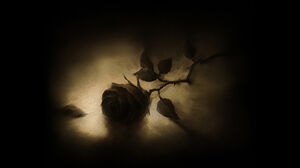 A Rose On the Floor