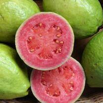 Guavafruit