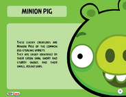 Minion Pig Toy Care