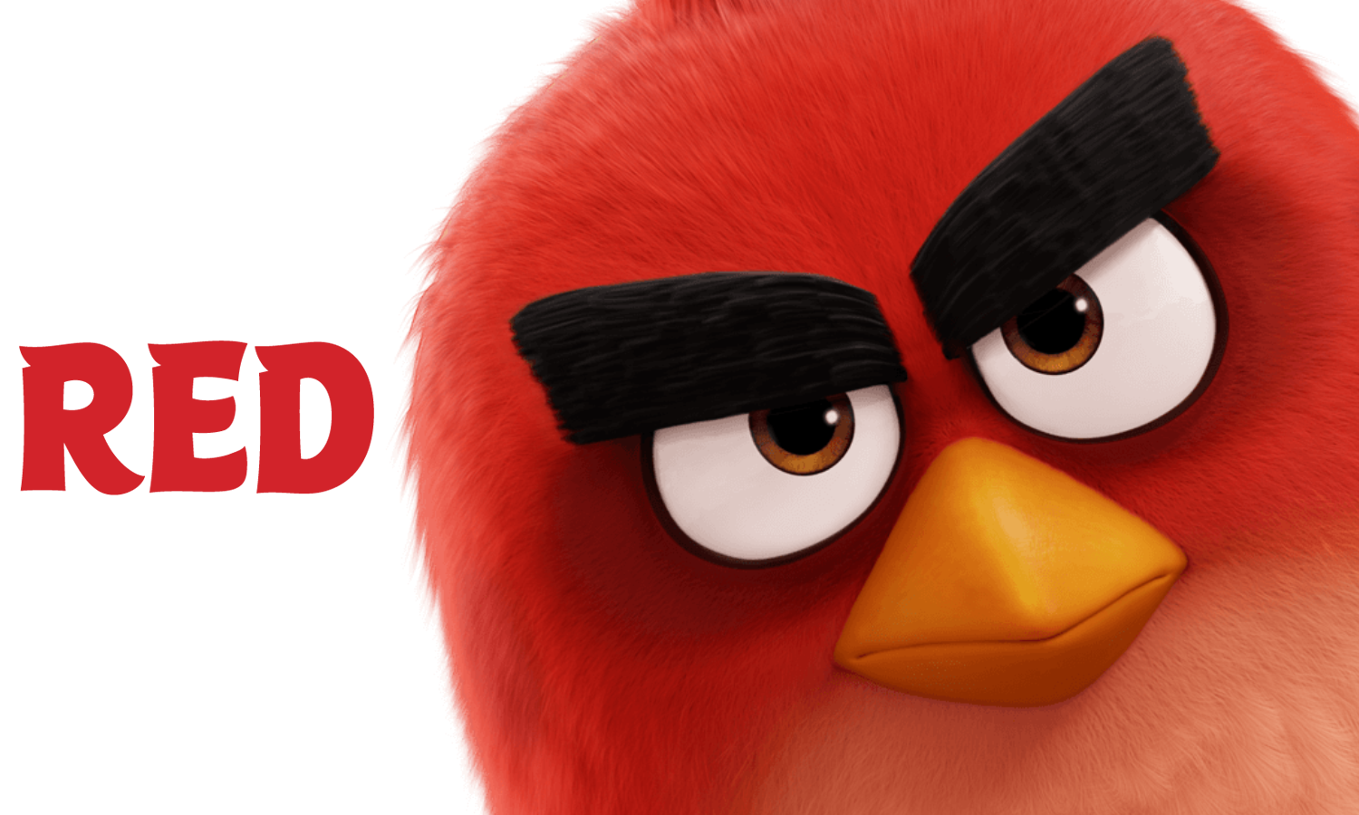 image angry bird movie angry birds wiki fandom powered by wikia. Black Bedroom Furniture Sets. Home Design Ideas