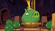 Pig talent 00001