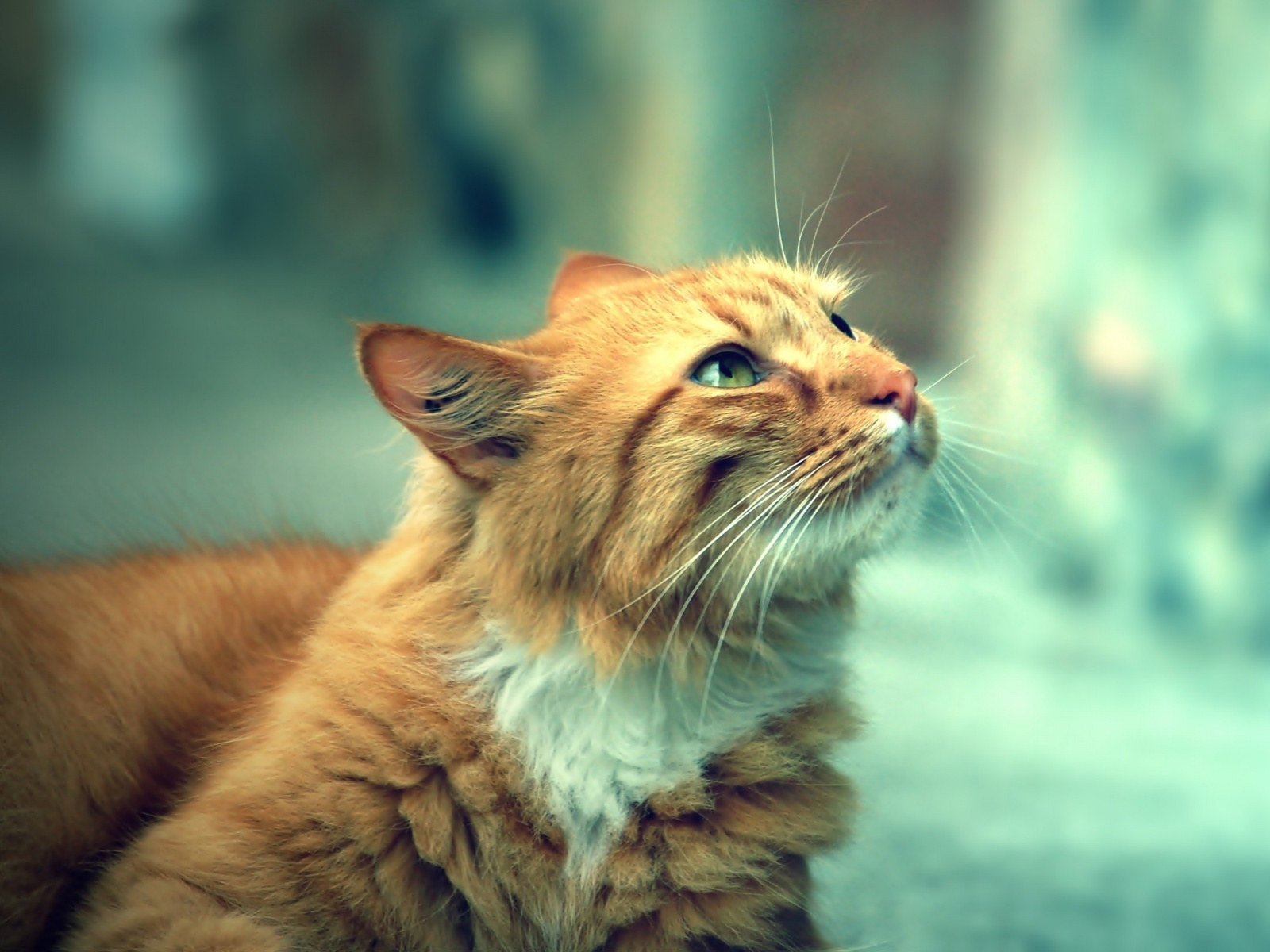 http://vignette1.wikia.nocookie.net/animal-jam-clans-1/images/4/43/Light-brown-Cat-1600x1200.jpg/revision/latest?cb=20160612184752
