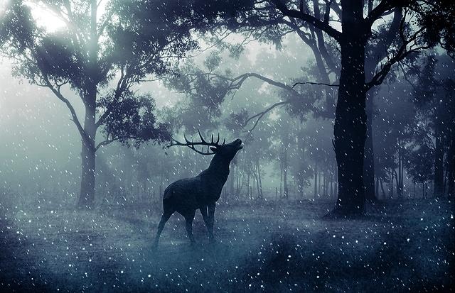 """Résultat de recherche d'images pour """"fantasy forest"""""""