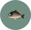 Crucian Carp (City Folk)