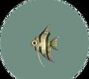 Fish (City Folk)