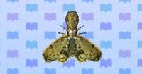 Lantern fly encyclopedia (New Leaf)