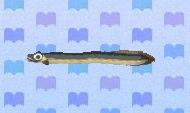 Eel encyclopedia (New Leaf)