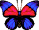 Agrias Butterfly (City Folk texture)