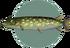 Pike (City Folk)