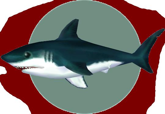 Shark (City Folk)