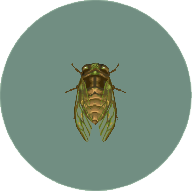 File:Evening Cicada (City Folk).png