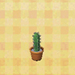 Tall-mini-cactus