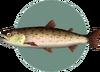 Stringfish (City Folk)