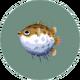 Puffer Fish (City Folk)