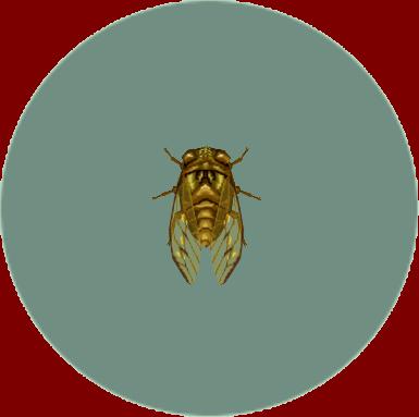 File:Walker Cicada (City Folk).png