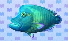 Napoleonfish encyclopedia (New Leaf)