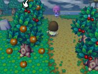 Animal Crossing wikia Pictures 165