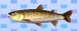 File:Stringfish encyclopedia (New Leaf).jpg