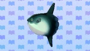 File:OceanSunfishNL.png