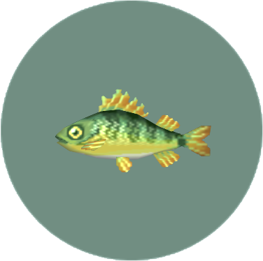 File:Yellow Perch (City Folk).png