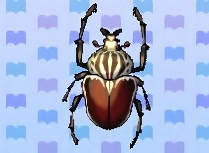 File:Goliath beetle encyclopedia (New Leaf).jpg