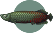 Arapaima (City Folk)