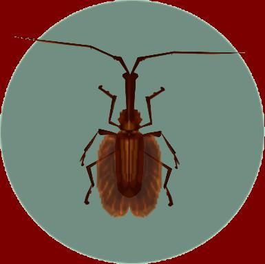 File:Violin Beetle (City Folk).png
