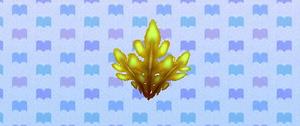 Seaweed encylopedia